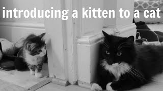 How to Introduce a Kitten to a Cat in 5 Easy Steps
