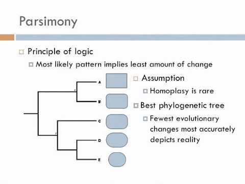 Biology 2, Lecture 4: Phylogenies