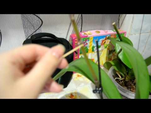 Содержание и уход за комнатными растениями