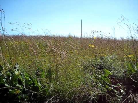 Prairie in Wisconsin.