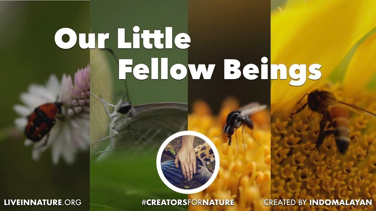 Earth Day  | Promo for the Realm of Small Things | Creators for Nature