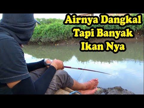 Mancing Di sungai Pinggir Jalan Strike Strike Mas Bro