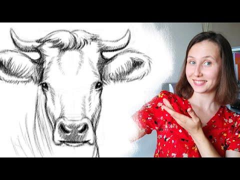 Как нарисовать быка карандашом поэтапно для начинающих