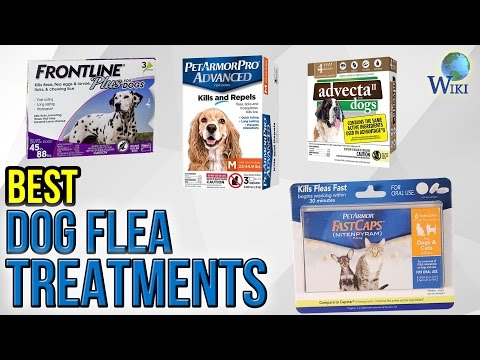 7 Best Dog Flea Treatments 2017