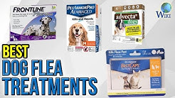 7 Best Dog Flea Treatments 2017