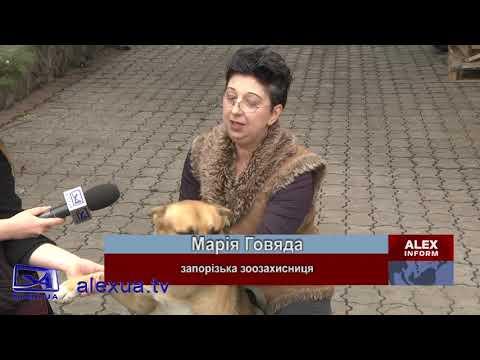 Телеканал ALEX UA - Новости: СОБІ НА КОРИСТЬ Чотирилапого врятували з під коліс авто