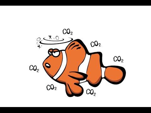 Nemo on Acid