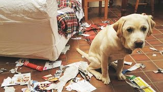Funny Guilty Dogs Compilation!