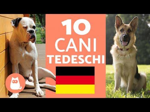 TOP 10 razze di cani TEDESCHI - Caratteristiche e curiosità!