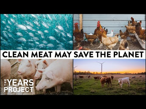 Clean Meat Can Clean The Air