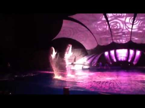 Atlanta aquarium dolphin show. Part 2