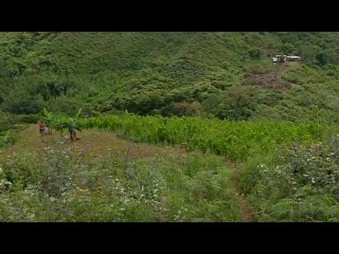 زراعة الكوكايين الكولومبية تحقق رقماً قياسياً بقيمة 2.7 مليار دولار…