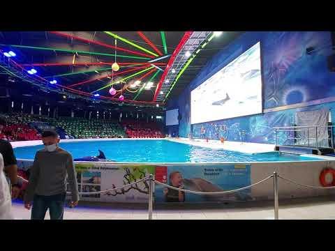 Part 2   Dubai Dolphinarium – Dolphin and Seal Show
