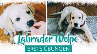 Erstes Training mit Labrador Welpe | Deckentraining |Beißhemmung | Ruhe üben | WELPENERZIEHUNG
