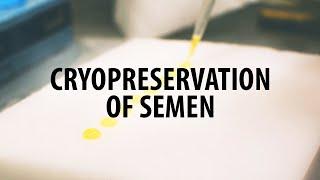 How to freeze ram semen