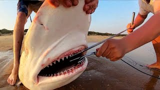 200KG+ SHARKS BECOME THE BAIT! BEACH FISHING INSANITY!