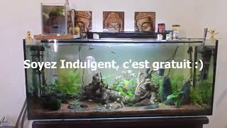 Présentation d'un aquarium d'eau douce de 240 litres.