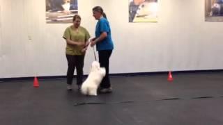 Jack Passes Canine Good Citizenship Certification