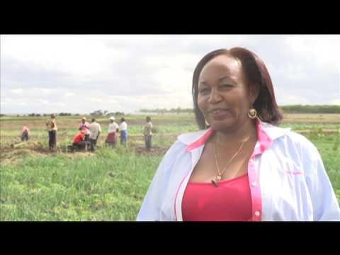 Smart Farm: Onion Farming