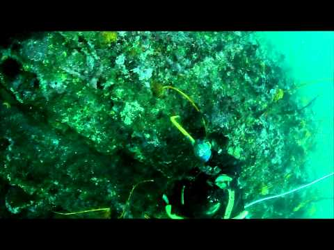 Grey Fin Films Ab Diving Clip