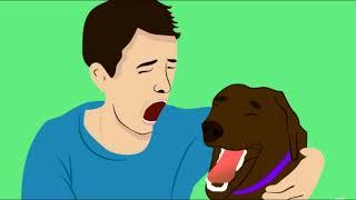 Если Ваша Собака Ведет Себя Так! Это значит только одно...