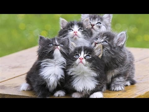 Chat Alsace France - 01bots #animaux