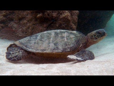 Snorkeling Ke'e Beach | Kauai