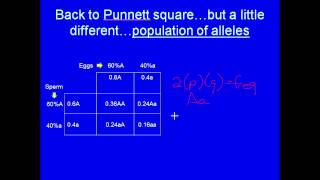 Population Genetics, Part 1