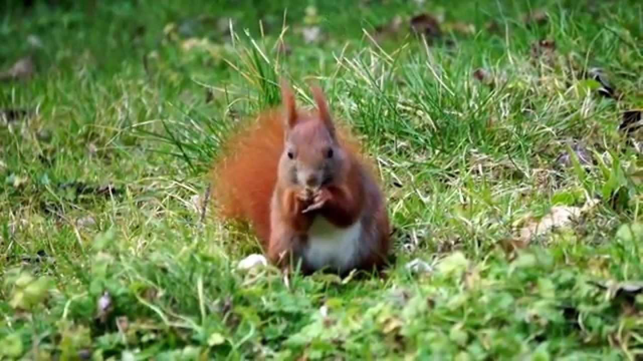 Guck mal, ein Eichhörnchen!\