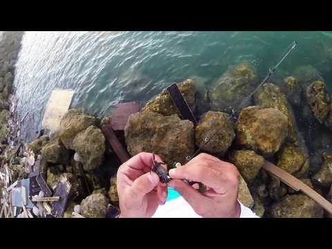Fishing With Fiddler Crabs On Low Tide