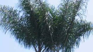 Palm Trees Trimmed & Skinned thumbnail