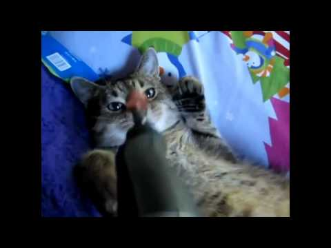 Funny cats compilation   Funny cat videos 2