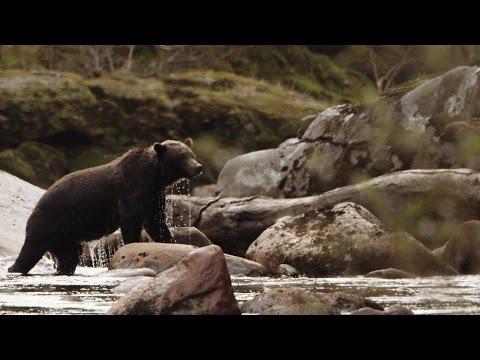 Explore British Columbia: Kayaking on Northern Vancouver Island
