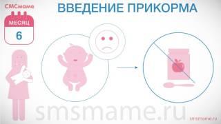 Ребенок 6 месяцев - рост и вес, введение прикорма, медосмотр.