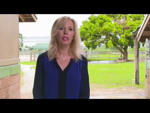 Miami SPCA Horse Shelter Saves Horses After Hurricane Irma