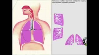 Использование интерактивной доски на уроках биологиии