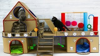 DIY Creative Cat House for Four Adorable Kittens