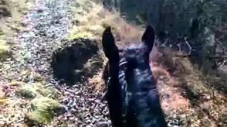 Адыгэш(Кабардинская порода лошадей)