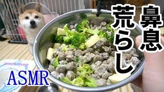 柴犬小春 【ASMR】ブロッコリーとリンゴのヨーグルト和え&α6400マイク感度 thumbnail