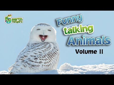 Funny Talking Animals: Episode Two