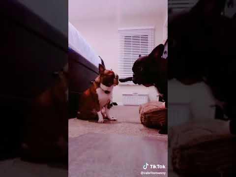 Te pasas Nico versión perros