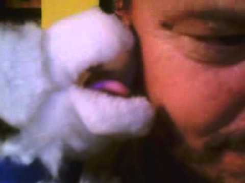 Amazing pets love and lick puppy