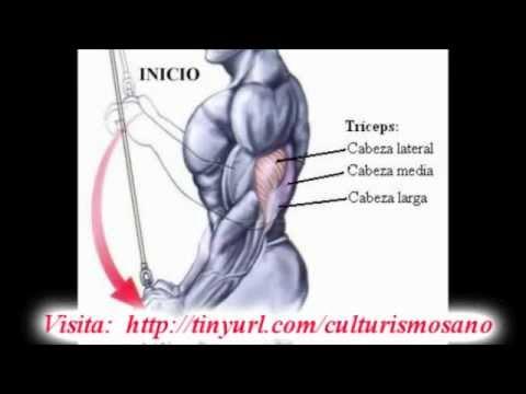 como+aumentar+masa+muscular+en+los+brazos