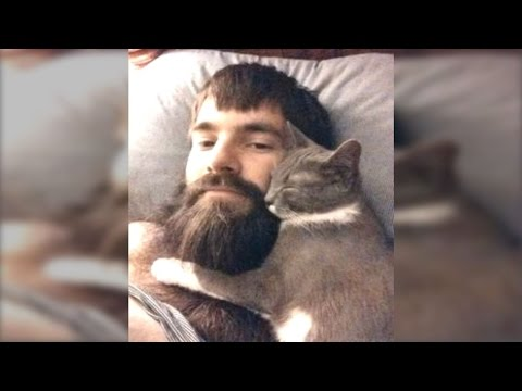 Funny Cats Love Beards Compilation || NEW HD