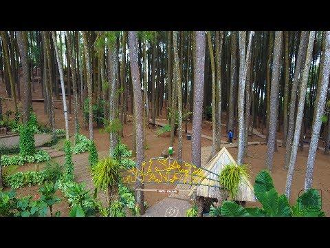 indonesia-aerial-drone-hutan-pinus-mangunan-imogiri-yogyakarta
