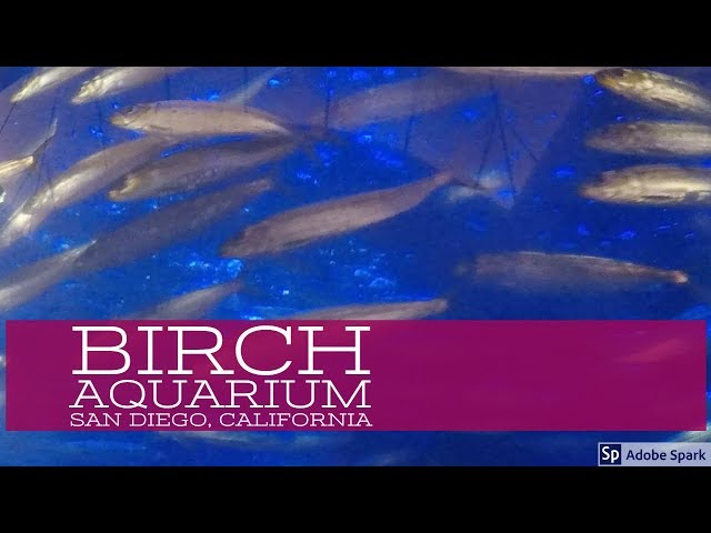 Birch Aquarium, San Diego, California USA – San Diego Videos