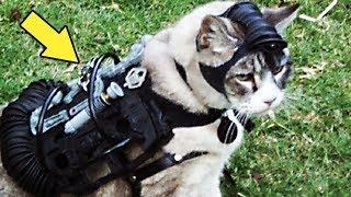 В ЦРУ тренировали кота, чтобы он следил за СССР и докладывал обо всём спецслужбам