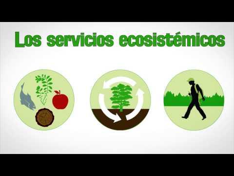 Munay -  Proyecto Ciudadano Ambiental - La Importancia De La Biodiversidad