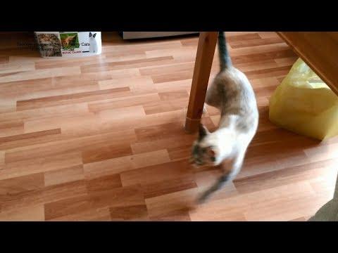 Вопрос: Почему кошка начинает ходить кругами?