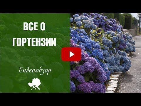 Декоративные кустарники с фото Купить саженцы красивых
